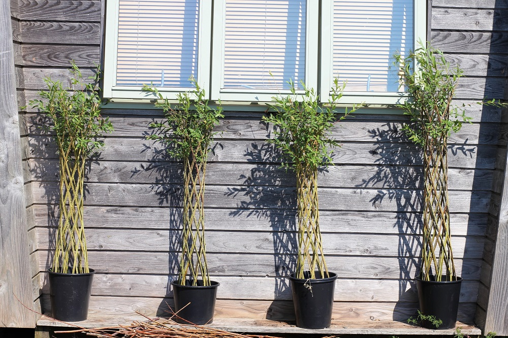 Living Willow (5)s