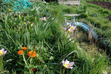 wildflower meadow eco park