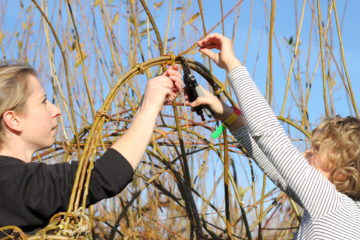 willow coppicing at the Eco Park