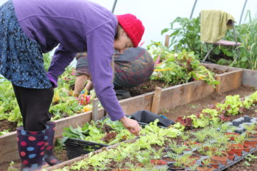 organic growing allotments mount pleasant